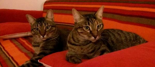 Nino i Nina_adoptats