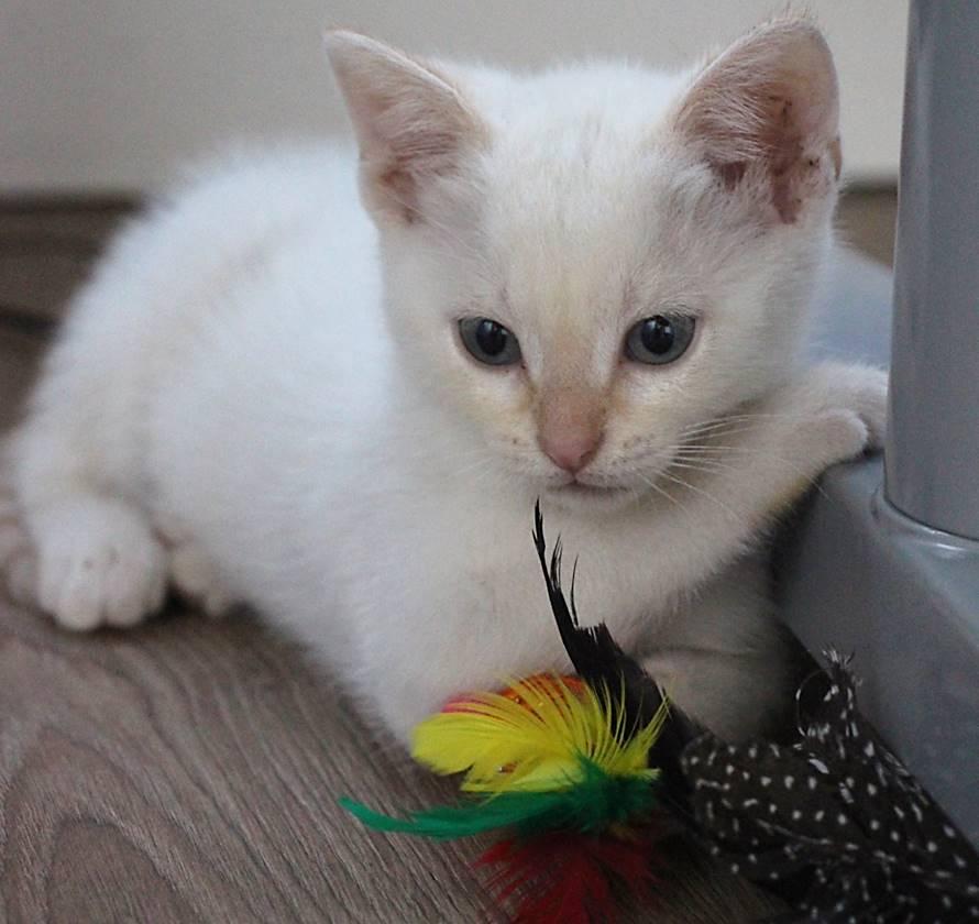 Cat Adoption Events San Jose