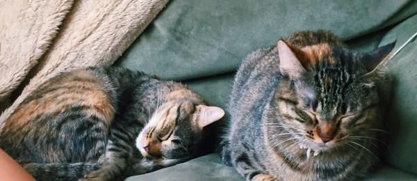 Nani y MIca